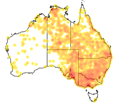 Map of Falco subniger records as at November 2013, created by Atlas of Living Australia, data courtesy Australian Faunal Directory.png