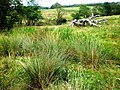 Marshy field near Opendale Beck - geograph.org.uk - 1439675.jpg
