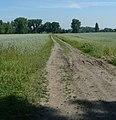 Maudacher Bruch - panoramio.jpg