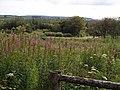 Meddon Plantation - geograph.org.uk - 504387.jpg