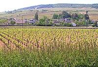Meursault,Burgundy.jpg