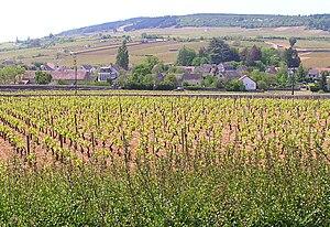Côte d'Or (escarpment) - The Côte d'Or near Meursault