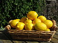 Meyers Zitrone (Citrus × meyeri) 2.jpg