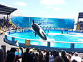 MiamiSeaquarium-KillerWale.jpg