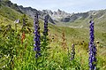 Mighty flowers below the Pic d'Artsinol West of Evolene. - panoramio.jpg