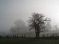 Mist and trees.jpg