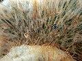 Mobarakabad, Qom-Cactaceae in Iran گلخانه کاکتوس، روستای مبارک آباد قم 13.jpg
