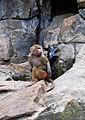 Monkey0473b.jpg