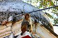Monkey at Pashupatinath.jpg