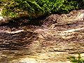 Morscher Baumstumpf - Fasern (Makro) 2.JPG