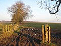 Mucky gateway near Penny Hill Farm - geograph.org.uk - 685227.jpg