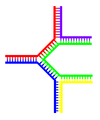 Multi-branch-dna.png