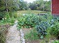 My garden in Maine.JPG