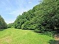 NSG-Lange Bäume 3.jpg