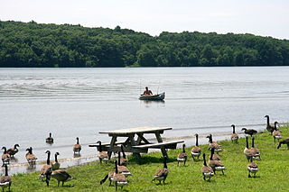 Nockamixon State Park State park in Pennsylvania, United States