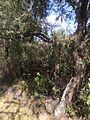 Naturaleza en El Charco del Ingenio junto a Presa.JPG