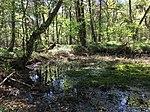 Nature-reserve-bueltenmoor-germany wdpa-81488 005 2018-05-07 12-08-55.jpg