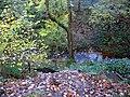 Nature Trail, Bonhill - geograph.org.uk - 278805.jpg
