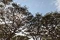 Nature of Ngorongoro Conservation Area (188).jpg