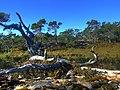 Naturen ved Steinbruddet - panoramio.jpg