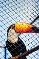 Natureza Curitiba Freitasfotos 001.jpg