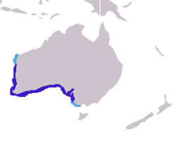 Neophoca cinerea distribution.png