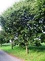 Neznámý strom (2).jpg