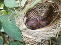 Nightingale Babies.jpg