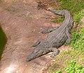 Nile-Crocodile-Safari2011RG0198.jpg