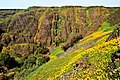 North Table Mountain Cliffs and Poppies.jpg