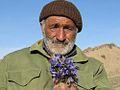 Novruz gülü-Kəndli.jpg