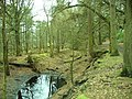 Old Fireclay Pit - In Shady Walks - geograph.org.uk - 1122014.jpg