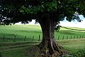 Old Tree - geograph.org.uk - 449030.jpg