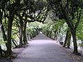 Oliwa park.JPG