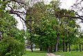 Omelne Kivertsivskyi Volynska-Makarevychivskyi park-inside view-1.jpg