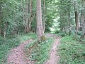 On the Sussex Border Path - geograph.org.uk - 189660.jpg
