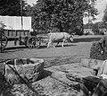 Opnamen FF-tentoonstelling te Enschede. Een Transvaalse boer met een huifkar get, Bestanddeelnr 904-7346.jpg