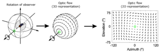 Optical flow pattern of apparent motion of objects, surfaces, and edges in a visual scene caused by the relative motion between an observer and a scene