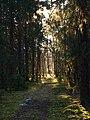 Orsa V, Sweden - panoramio.jpg