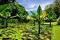 Orto Botanico - panoramio.jpg