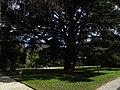 Orto Botanico Lucca - in trazione.jpg