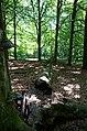 Osbecks bokskogar - KMB - 16001000180424.jpg