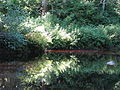 Oswegatchie River - tannin-stained water.jpg