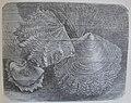 Ottův slovník naučný - obrázek č. 3082.JPG