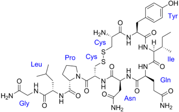 Oxytocin with labels.png