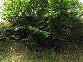 Příšovská homolka (014).jpg