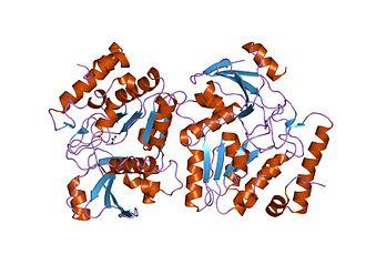 DNA glycosylase - Epstein–Barr virus uracil-dna glycosylase in complex with ugi from pbs-2