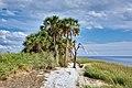Palm trees along lighthouse beach 2013-07-15.jpg