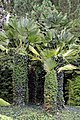 Palm trees in Nuthurst village, West Sussex, England 02.jpg