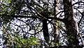 Pambadum Shola National Park - panoramio (16).jpg